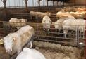 Allard F-X Sprl - Amménagement de batiments agricole
